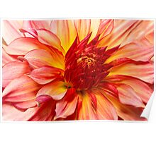Flower - Dahlia - Natures breath taker Poster
