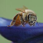 Bee on the boat by loiteke