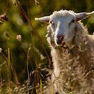 Funny Sheep by LudaNayvelt