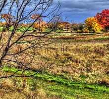 Maple and Oak Fall Colors by Roger Passman