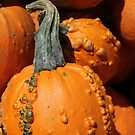 Gourd by marybedy