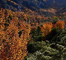 Autumn at Cradle by Karine Radcliffe