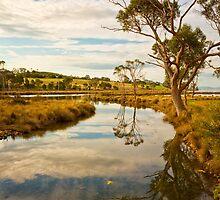 Saltwater River, Tasmania #2 by Chris Cobern