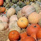 Pumpkins at the Orchard 2 by marybedy