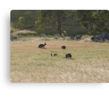 And now there are four! Western Greys, 'Arilka' Adelaide Hills. S.A. Canvas Print