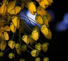 Rain of Gold by Mario Morales Rubi