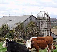 Country Cows Say Moo by vigor