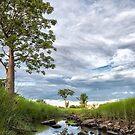 The Wet Season by Mieke Boynton