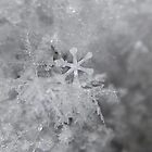 Single Snowflake by Sandra  Aguirre