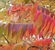 Colour Change by Martha Medford
