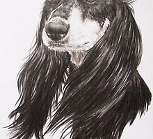 Saluki Portrait by BarbBarcikKeith