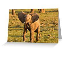 Cheeky Elephant Greeting Card