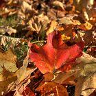 Fallen Leaves V by Rich Fletcher