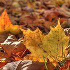 Fallen Leaves VI by Rich Fletcher