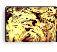 Rose of Jericho Canvas Print