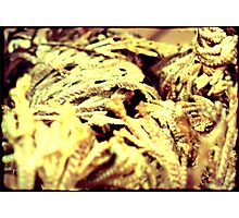 Rose of Jericho Photographic Print