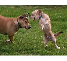 Dogs with game face on .8 Photographic Print