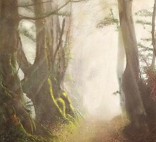 Forest Light and Mood by Angela Stanton