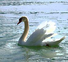 White Swan by BorisBurakov