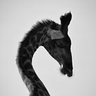 AFRICAN WILDLIFE IN MONOCHROME by Shannon Benson