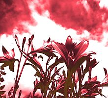 Lilies in Red by BorisBurakov
