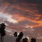 California Palm Sunset by Glenn McCarthy