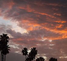 California Palm Sunset by Glenn McCarthy