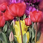 Nannup Tulips_Card by AsapArt