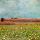 Flowers and Fields With Blue Skies Above by Susan Werby
