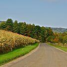 Corn field 1 by Carolyn Clark