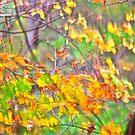 Autumn leaves 2014 by Carolyn Clark