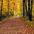 Walk in the Autumn Wood by Kenneth Keifer