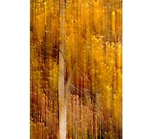 Autumn abstract Photographic Print
