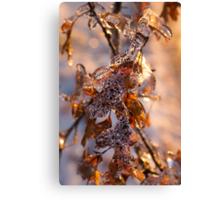 Mother Nature's Christmas Decorations – Golden Oak Leaves Jewels Canvas Print