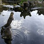 Asian Otters at Escot Park.Devon UK by lynn carter