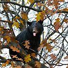 Bear in Tree by Jim Cumming