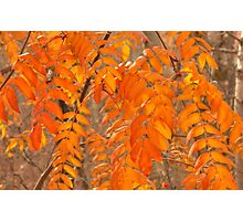 Mountain Ash Leaves in Autumn Photographic Print