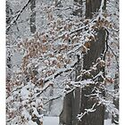 Fallen Snow With Leaves Still Clinging by Liesl Gaesser