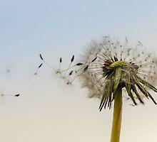 The Dandelion Clock by wgell