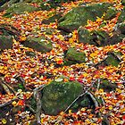 Rocks and Leaves by Kenneth Keifer