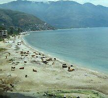 Cow beach by Maria1606