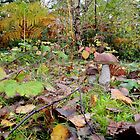 Ceps and Autumn Leaves by relayer51