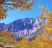 MAMMOTH MOUNTAIN FRAMED WITH GOLDEN FALL FOLIAGE by CHERIE COKELEY