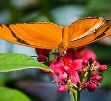 Orange Wings by George I. Davidson