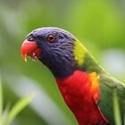 Rainbow Lorikeets by Robyn J. Blackford by aussiebushstick