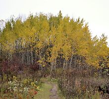 October Trees on a Gray Day by Kathleen Brant