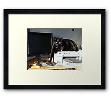 Playing Cat And Mouse - NZ Framed Print