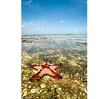 Horned Sea Star Photographic Print