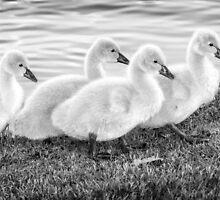 All in a Row by Mieke Boynton