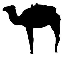 Camel Silhouette by kwg2200